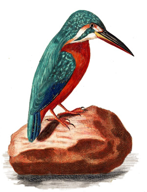 KingFisher profile picture ThePrintsCollector